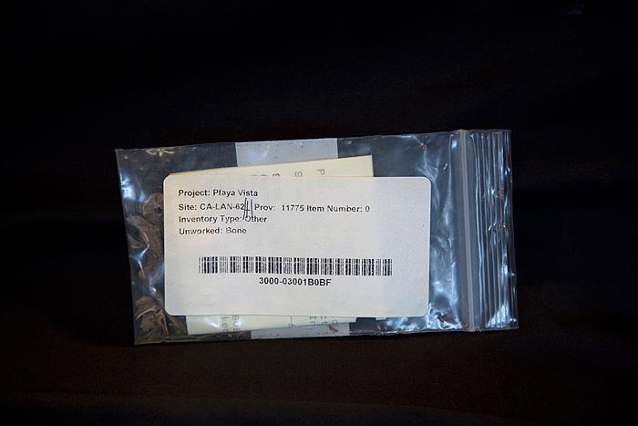 Unworked Bone, Project: Playa Vista, Site: CA-LAN-62, Prov: 11775, Item Number 0, The Fowler Museum, Los Angeles, 2013